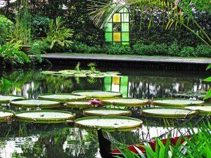 flower garden in malaysia